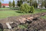 Znaleziska na dawnym cmentarzu przy Wita Stwosza w Pruszczu. Odkopano pozostałości grobowców  ZDJĘCIA