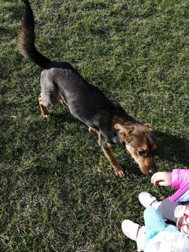 Gmina Kiszkowo: pozostawony pies szuka w domu. Najprawdopodobniej ktoś go wyrzucił