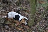 Kto porzucił psa na pewną śmierć?