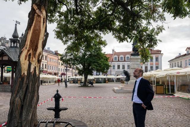 Czy drzewo na Rynku w Rzeszowie uda się uratować? Na razie nie wygląda to obiecująco. Na zdjęciu Konrad Fijołek
