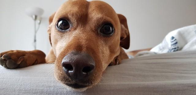 Zobacz najlepsze hotele w Ciechocinku, które akceptują zwierzęta>>>