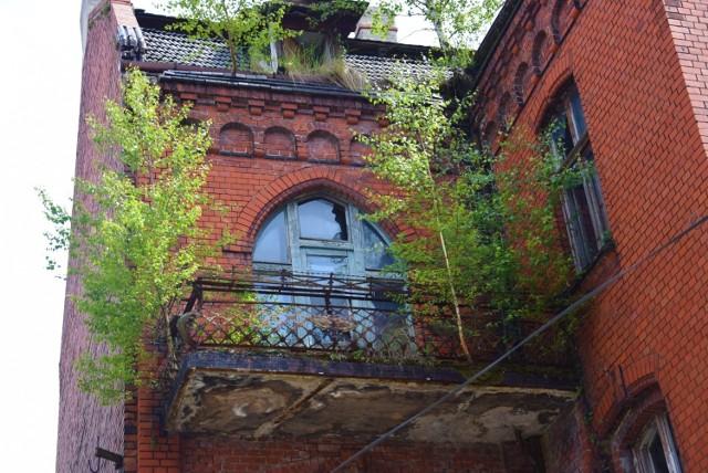 Największe drzewo wystaje z dachu od północnej strony i ma już ponad 5 metrów wysokości. Mniejsze drzewa rosną na balkonach. Kolejne krzewy zaczynają wyrastać z murów. Całość wygląda coraz bardziej zjawiskowo.