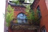 Kędzierzyn-Koźle. Na zabytkowej kamienicy rosną... drzewa. Niektóre są już tak duże, że mogą podlegać ochronie przed wycięciem
