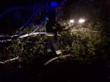 Prawie 70 interwencji straży pożarnej w powiecie piotrkowskim po poniedziałkowej wichurze i ulewie