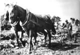 Tak wyglądała opolska wieś oraz rolnictwo 40, 50 i więcej lat temu. Zobaczcie galerię czarno-białych fotografii z archiwum nto