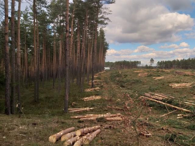 Nie milkną echa wycinki lasu w Kokotku, a nadciąga kolejna w Koszęcinie