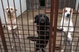 Wałęsające się po Osielsku psy, to zagrożenie dla mieszkańców i innych zwierząt - uważają w gminie