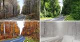 Cztery pory roku na 12 zdjęciach. Jadąc drogą nr 791 między Olkuszem a Trzebinią olkuszanin zatrzymywał się raz w miesiącu i fotografował