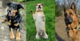 Psy ze Schroniska dla Zwierząt w Bydgoszczy czekają na nowy dom. Zobaczcie, jakie są piękne! [zdjęcia]