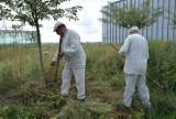 Kosy poszły w ruch! Podniebne sianokosy na tarasie widokowym Centrum Spotkania Kultur w Lublinie. Zobacz zdjęcia