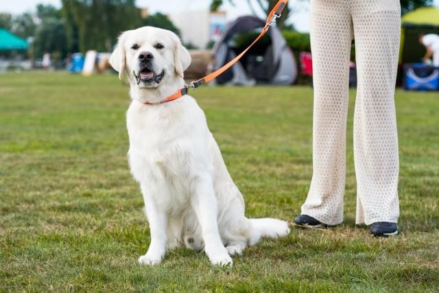 Weterynarze zachęcają do szczepień psów.