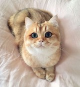 Oto najpiękniejsze koty na świecie. Nie oderwiecie od nich oczu! [GALERIA]