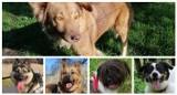 Psy do adopcji z Nowej Soli. Czekają na swojego właściciela. Niektóre już bardzo długo
