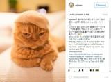 Koty, które noszą kapelusze z... własnej sierści. Zabawne zdjęcia japońskiego fotografa