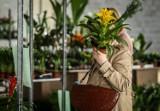 Rusza akcja adopcji roślin z warszawskich biurowców. Do rozdania jest aż 5 tys. okazów
