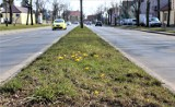 Pierwsze oznaki wiosny w Łęczycy są już widoczne (ZDJĘCIA)