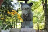 Wilk, który leczył z niemocy płciowej. Można go odwiedzić w Kryłowie Kolonii