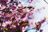 Kwiaty wiosenne do ogrodu. Które kwiaty kwitną na wiosnę i jak o nie dbać? Przewodnik dla początkujących i zaawansowanych ogrodników 28.04.