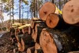 Wycinki drzew w Trójmiejskim Parku Krajobrazowym. Przedmiot kontrowersji i sporów z leśnikami [zdjęcia]