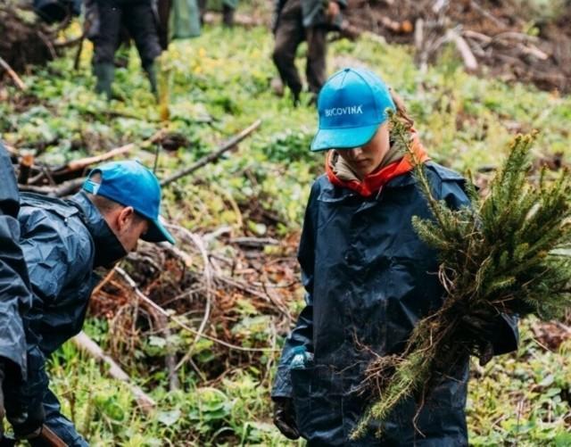 Marka Bukovina należące do Maspexu z Wadowic, zorganizowała  w tym roku akcję zalesiania. Sadzenie drzew na szeroką skalę miało miejsce w rejonie Valea Secu w gminie Dorna Candrenilor w Rumunii.