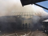 Łany koło Ciska. Trzynaście zastępów straży gasiło pożar, który wybuchł w niedzielę przed południem