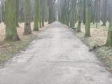 Pleszew. 120 tysięcy złotych na remont asfaltowych alejek w Plantach