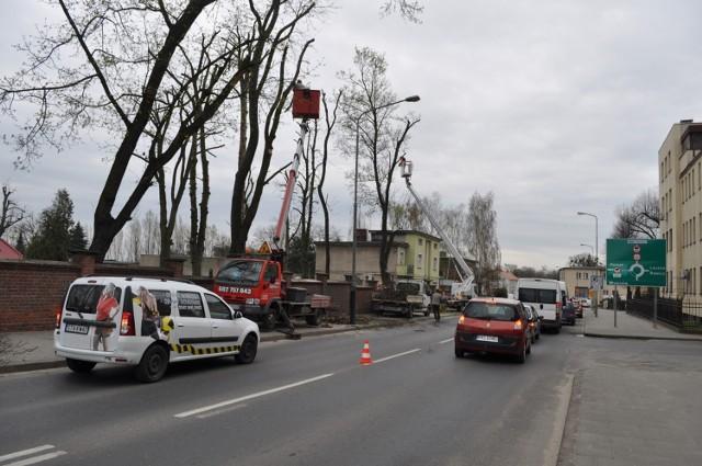 Śrem: podcinają drzewa na ul. Sikorskiego