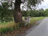 Strażacy usuwali gniazdo groźnych owadów z drzewa rosnącego przy drodze gminnej