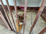 ZK Gębarzewo. Więźniowie będą naprawiać budy dla psów ze schroniska w Gnieźnie