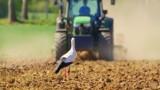 Dopłaty bezpośrednie 2021. Do kiedy potrwa nabór wniosków? Izba rolnicza chce przedłużenia terminu