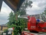 Powiat puławski. Pozrywane linie energetyczne i połamane drzewa. Nad Kośminem przeszła gwałtowna burza