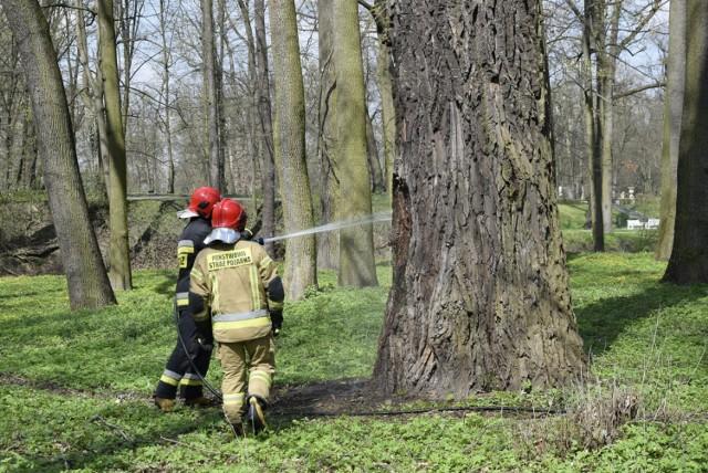 Strażacy PSP w Skierniewicach szybko uporali się z pożarem drzewa w Parku Miejskim