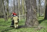 Park Miejski w Skierniewicach odwiedzili strażacy. Zapaliło się drzewo na wyspie ZDJĘCIA