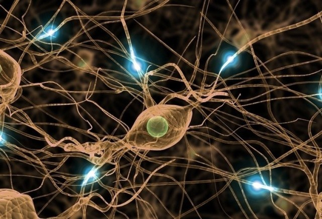 Czy stymulowanie fal mózgowych może znacząco poprawiać naszą pamięć? Naukowcy z Bostonu twierdzą, że dzięki tej metodzie można sprawić, by siedemdziesięciolatkowie zapamiętywali informacje tak sprawnie, jak… dwudziestolatkowie! Niestety na razie efekt ten utrzymuje się nie dłużej niż 50 minut od zakończenia stymulacji.