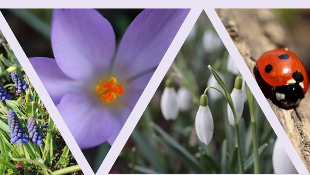 Ogród przy Muzeum Okręgowym to świetne miejsce na wiosenny spacer