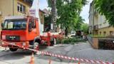 Wycinka drzew na Pasiece w Opolu. Pod topór rośliny przy ulicach Barlickiego i Konsularnej
