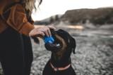 Idziesz z psem na spacer? Uważaj, możesz dostać nawet 500 zł kary! Nowe mandaty dla właścicieli psów [04.04.2021]