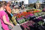 Najlepsze kwiaty na balkon i do ogrodu. Te rośliny możesz kupić na Targowisku Miejskim w Kościerzynie
