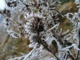 Wraca mroźna zima? Jest długoterminowa prognoza pogody na luty 2021