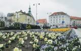 Radna Karolina Sadowska proponuje kwietne witacze przy wjazdach do Kalisza. Co na to Miasto?