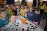 Chełm. Przedszkolaki posadziły żonkile - symbol nadziei dla podopiecznych hospicjów