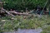 Wichury dają się w znaki na Podkarpaciu. Połamane konary i powalone drzewa. 50 interwencji strażaków