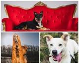 Te słodkie psiaki czekają na dom! Przygarnij psa ze schroniska w Poznaniu