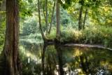 Uroczysko Piekiełko, rezerwat w Gołąbku – piękne zdjęcia autorstwa młodych tucholan