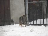 Zima Żory: Zimowe zdjęcia z miasta. Zobaczcie zdjęcia!