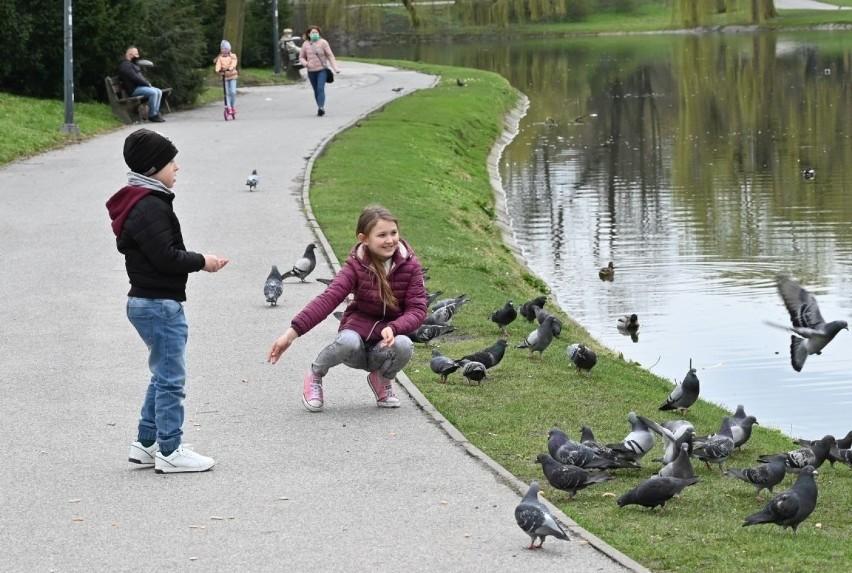 W niedzielę, 18 marca, w Parku Miejskim w  Kielcach nie...