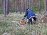 Radomierz/Olejnica: Mężczyzna zaginął w lesie podczas grzybobrania