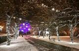 Tarnobrzeg w śnieżnej, zimowej scenerii i bajecznych kolorach iluminacji. Zobaczcie (ZDJĘCIA)
