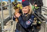 Kilka dni kociaczek cierpiał uwięziony w metalowej konstrukcji. Czekał na pomoc pięknej policjantki?! Ale cwaniak…