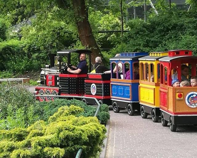 Kolorową lokomotywą można objechać cały łódzki ogród zoologiczny. Podróż trwa 20 minut.